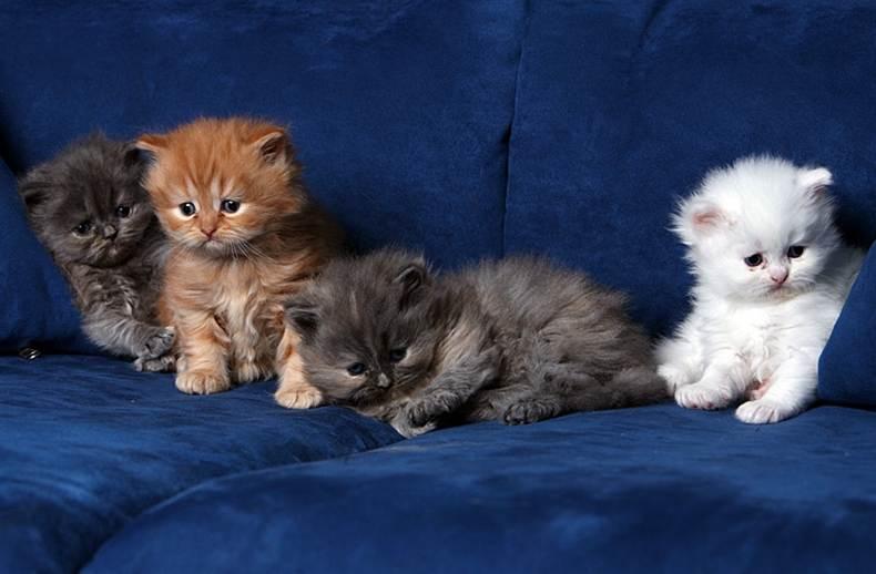 Quatro gatos manos