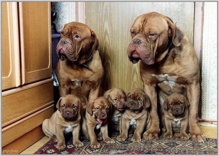 Casal de cães e filhotes