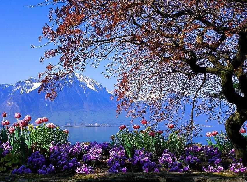 Flores da montanha