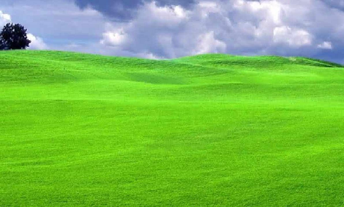 Campos verdes 2