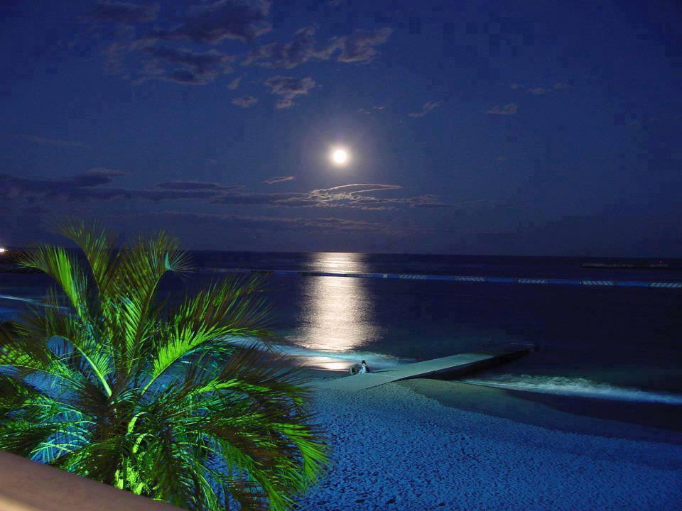 Palmeira mar e lua