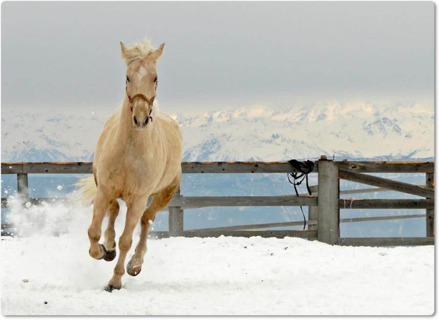 Cavalo no gelo
