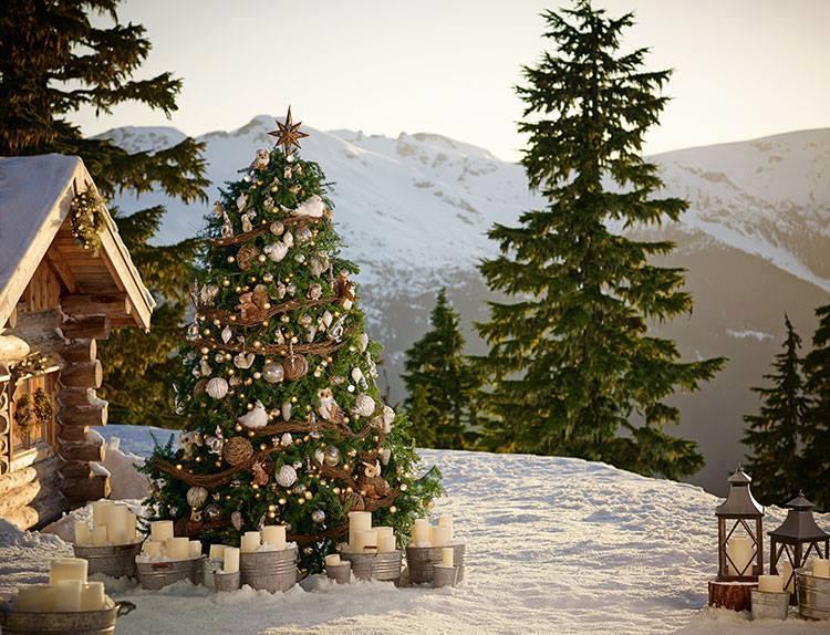 Arvores de natal