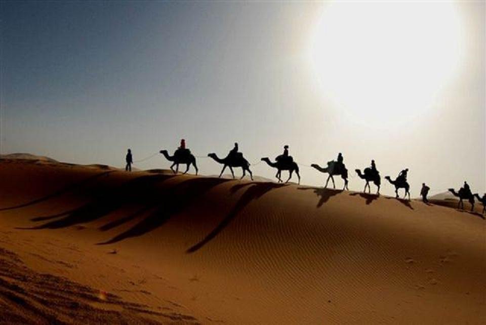 Cavalo areia deserto