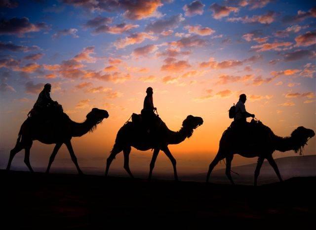 Camelos ao por do sol