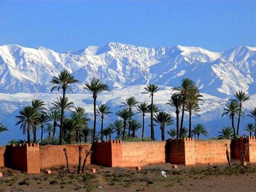 Coqueiros no deserto