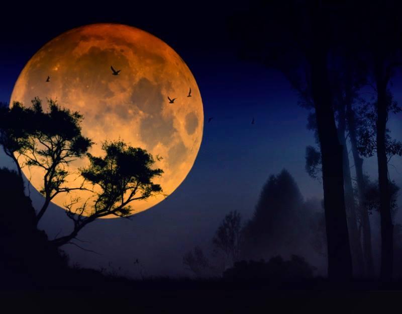Lua cheia laranja