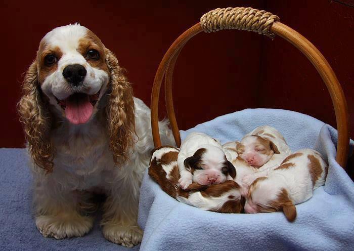 Mãe e filhotes de cão