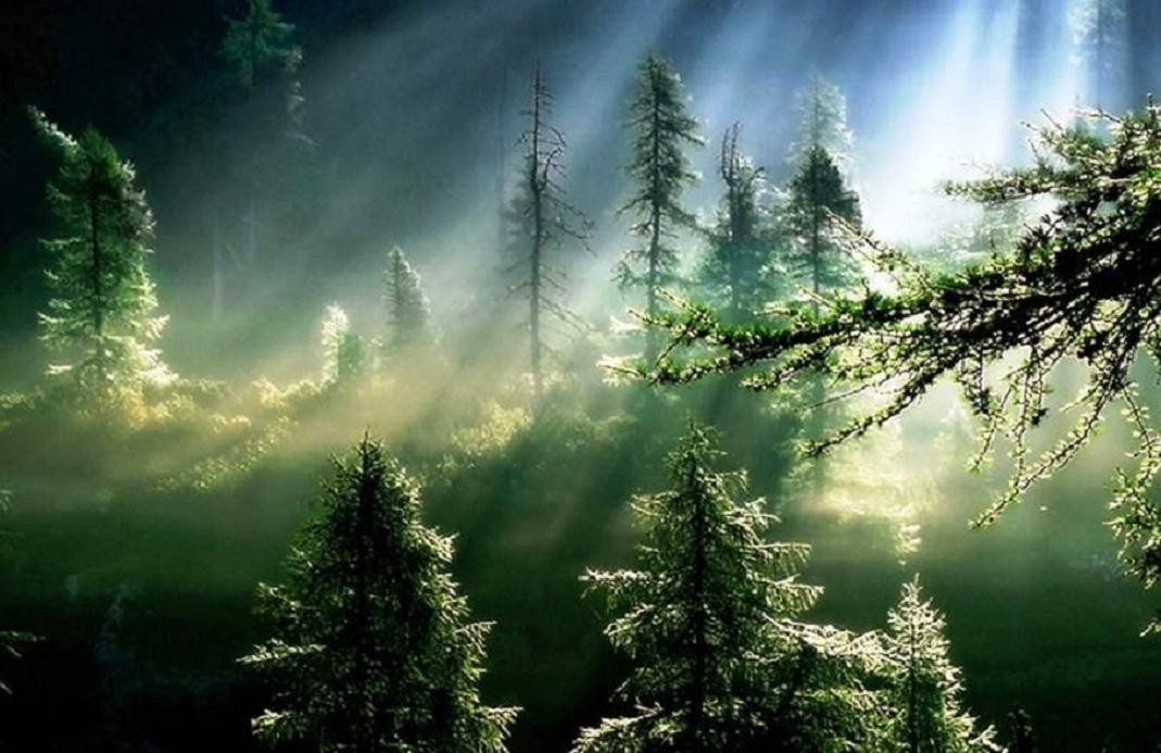 Bosque Indonésia