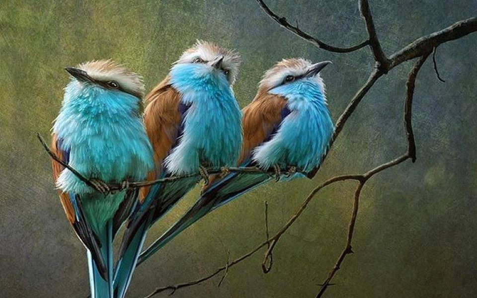 Três passaros azuis