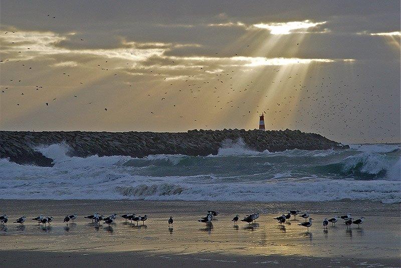 Aves no mar