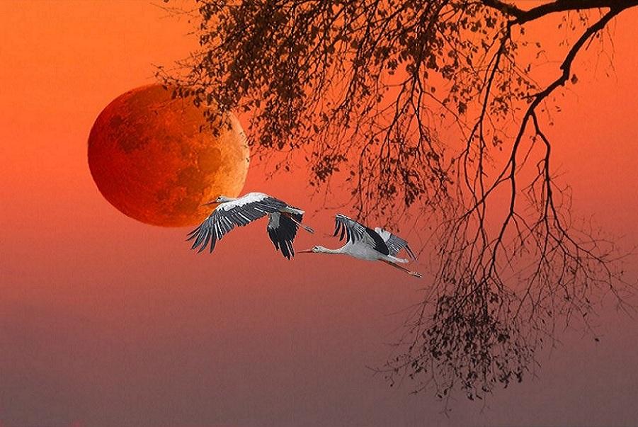 Passarro lua voando