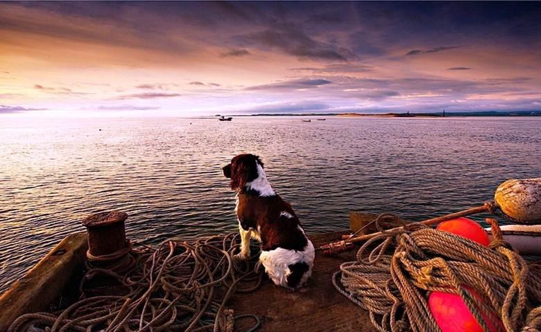 Cães esperando