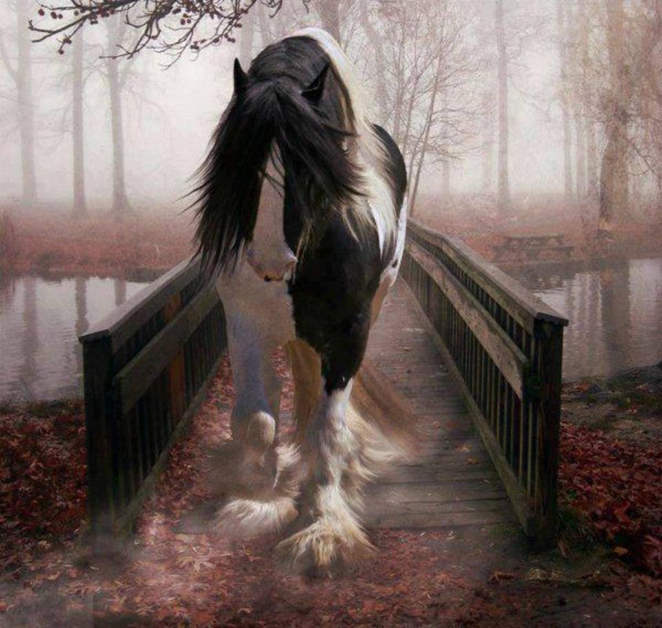 Cavalo preto e branco