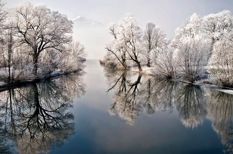Arvores brancas