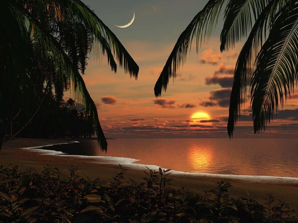 Palmeira mar sol