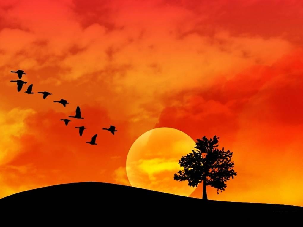 Aves voando